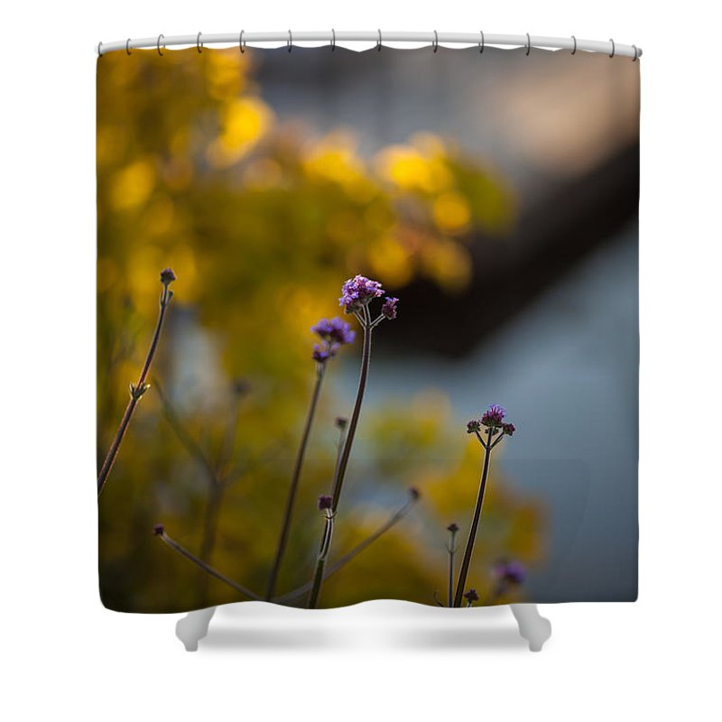 Flower Shower Curtain featuring the photograph Delicate Bursts Of Purple by Mike Reid