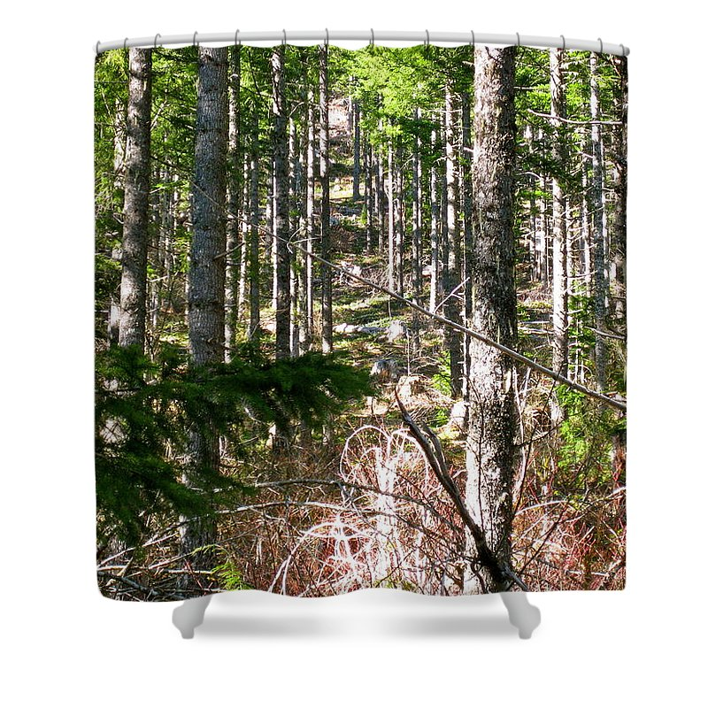 Trees Shower Curtain featuring the photograph Depth Of Trees by Linda Hutchins