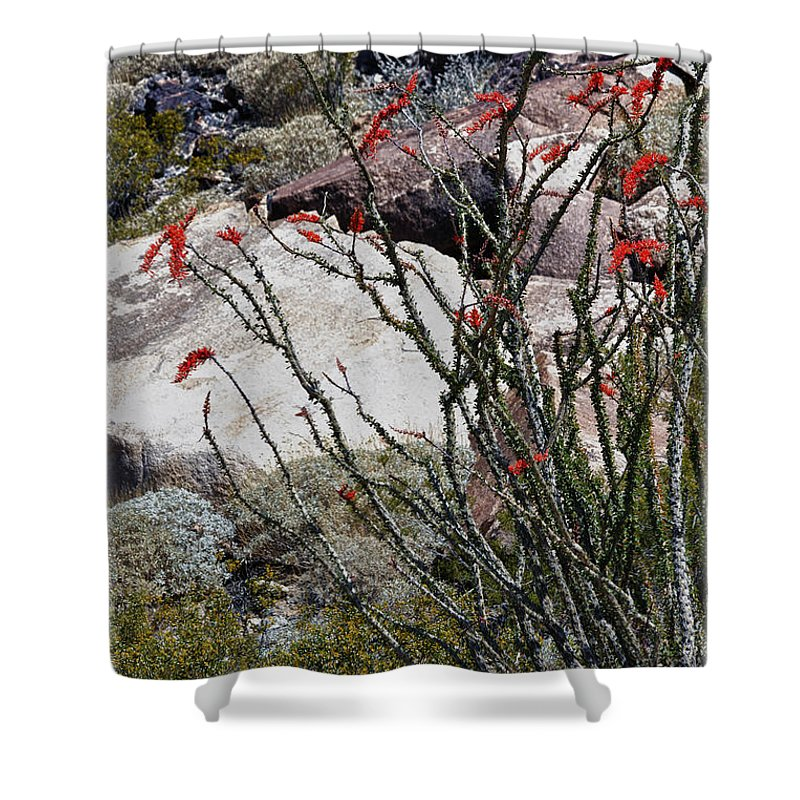 Ocotillo Shower Curtain featuring the photograph Desert Spring by Linda Dunn