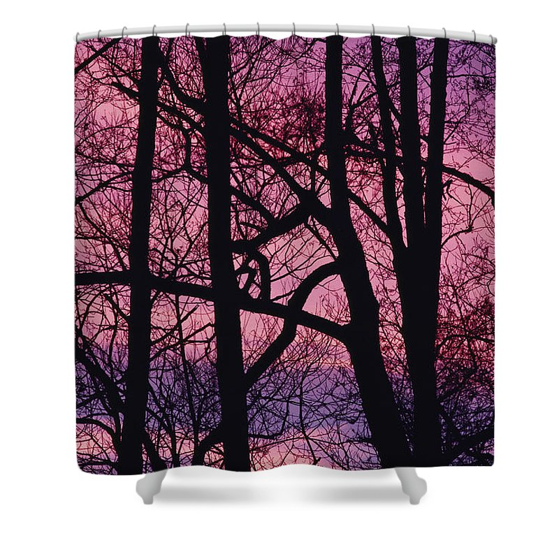 Tree Trunks Shower Curtain featuring the photograph Detail Of Bare Trees Silhouetted by Mattias Klum