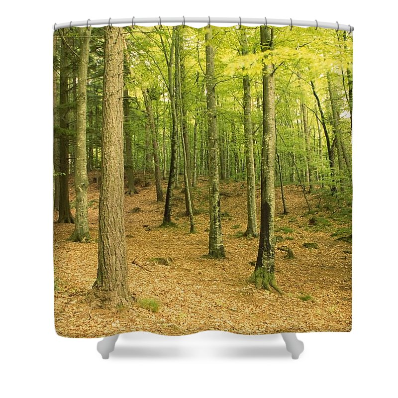 County Wicklow Shower Curtain featuring the photograph Devils Glen Woods, County Wicklow by Richard Cummins