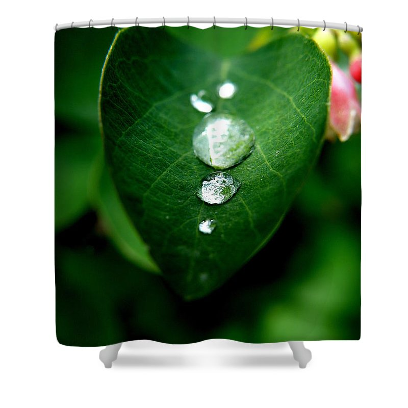 Floral Shower Curtain featuring the photograph Dew Drops by Lainie Wrightson