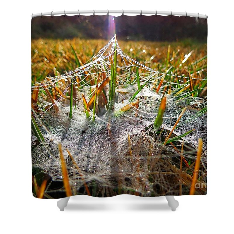 Dew Shower Curtain featuring the photograph Dewy Web 02 by Rrrose Pix