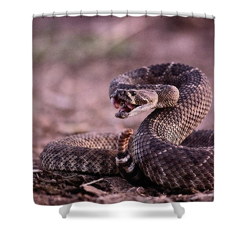 North America Shower Curtain featuring the photograph Diamondback Rattlesnake Crotalus by Joel Sartore