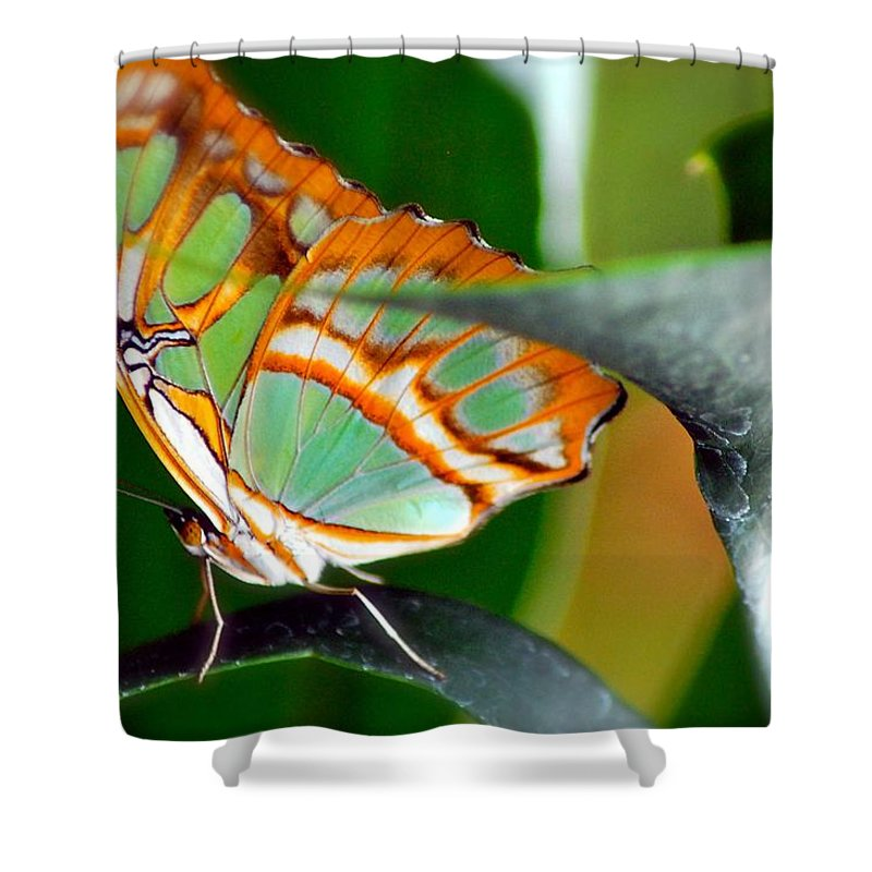 Butterfly Shower Curtain featuring the photograph Dido Longwing Butterfly by Peggy Franz