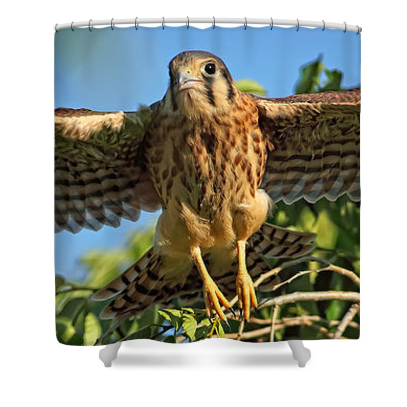 Light Shower Curtain featuring the photograph Digitally Enhanced Image, Painterly by Robert Postma
