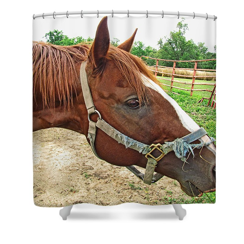 Nature Shower Curtain featuring the photograph Do I Have Hay On My Nose by Debbie Portwood