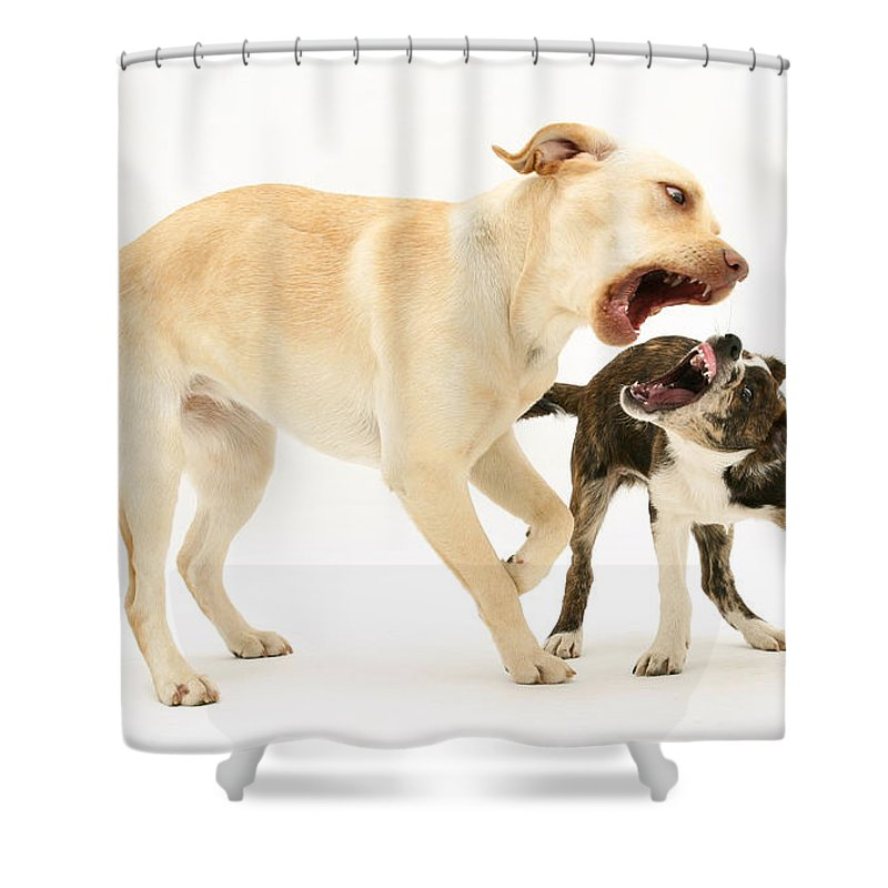 Animal Shower Curtain featuring the photograph Dogs Playing by Mark Taylor
