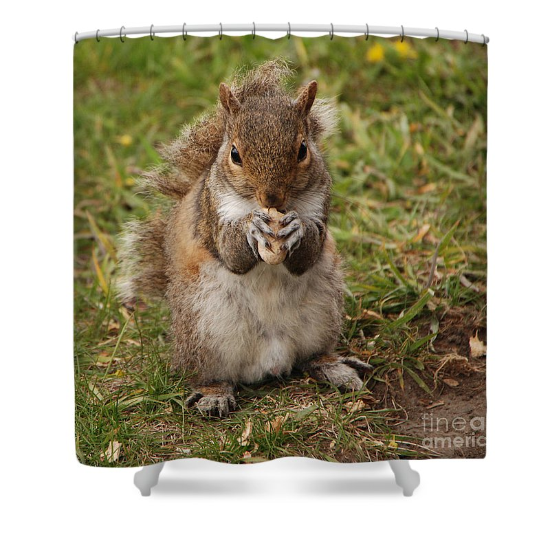 Squirrel Shower Curtain featuring the photograph Dont Even Think About It Its Mine by Grace Grogan