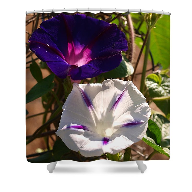 Purple Shower Curtain featuring the photograph Double Delite by Teri Schuster