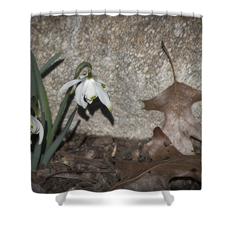 Galanthus Shower Curtain featuring the photograph Double Snowdrops by Teresa Mucha