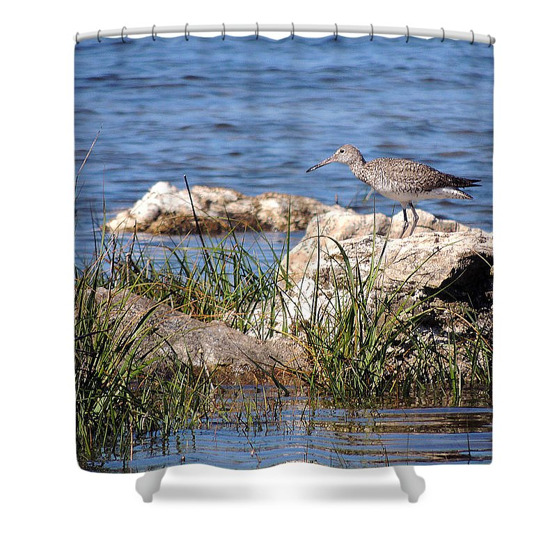 Birds Shower Curtain featuring the photograph Dowitcher by Marilyn Holkham