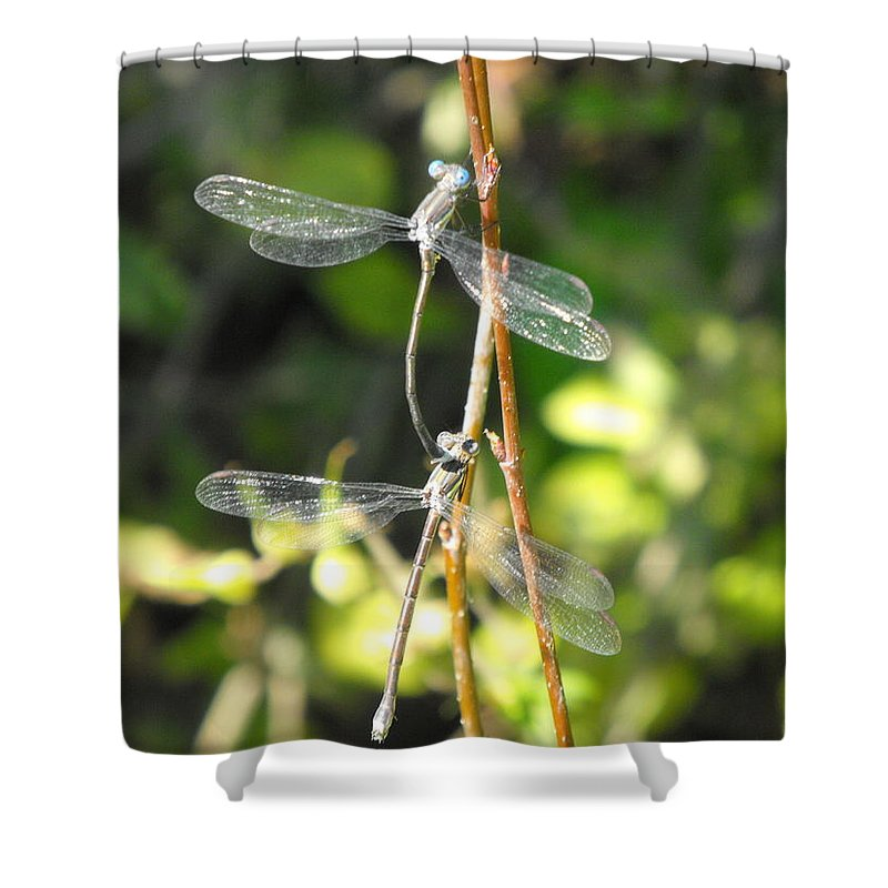 Dragonflies Shower Curtain featuring the photograph Dragonflies by Paulina Roybal