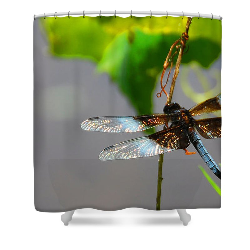 Insects Shower Curtain featuring the photograph Dragonfly by Cindy Manero