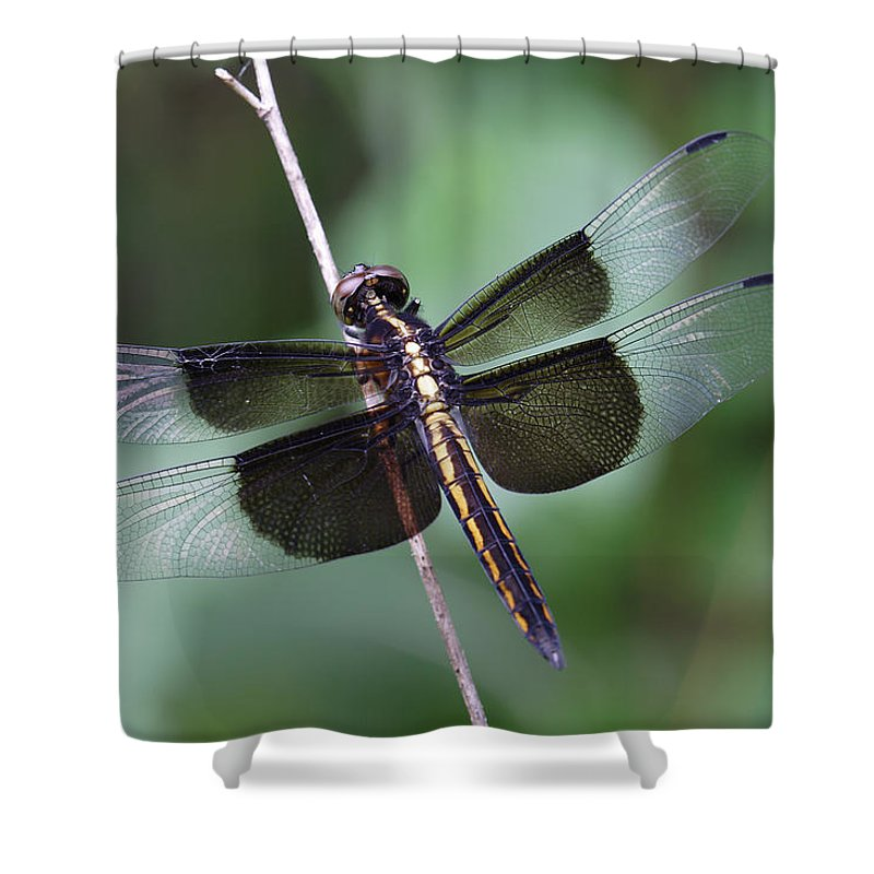 Insect Shower Curtain featuring the photograph Dragonfly by Daniel Reed