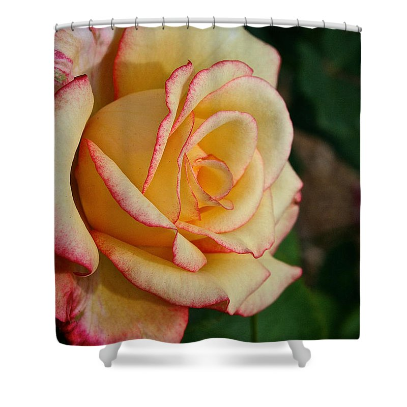 Plant Shower Curtain featuring the photograph Dream Come True Grandiflora by Susan Herber