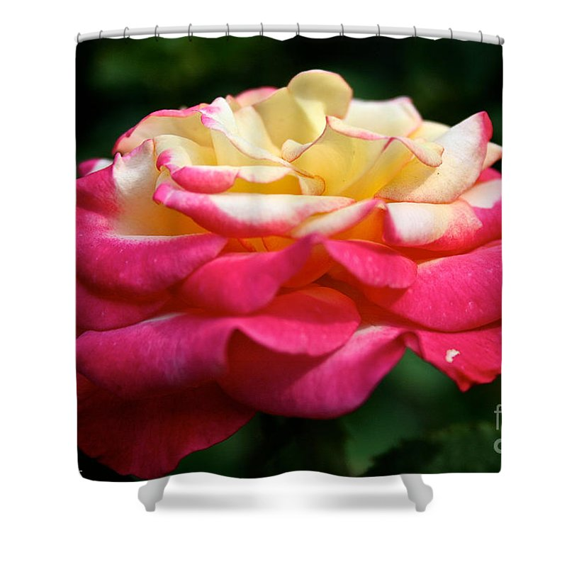 Plant Shower Curtain featuring the photograph Dream Come True by Susan Herber