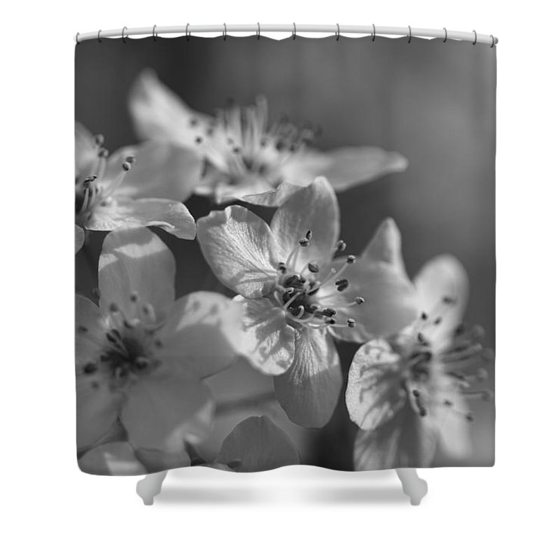 Bradfore Shower Curtain featuring the photograph Dreamy Spring Blossoms In Black And White by Kathy Clark