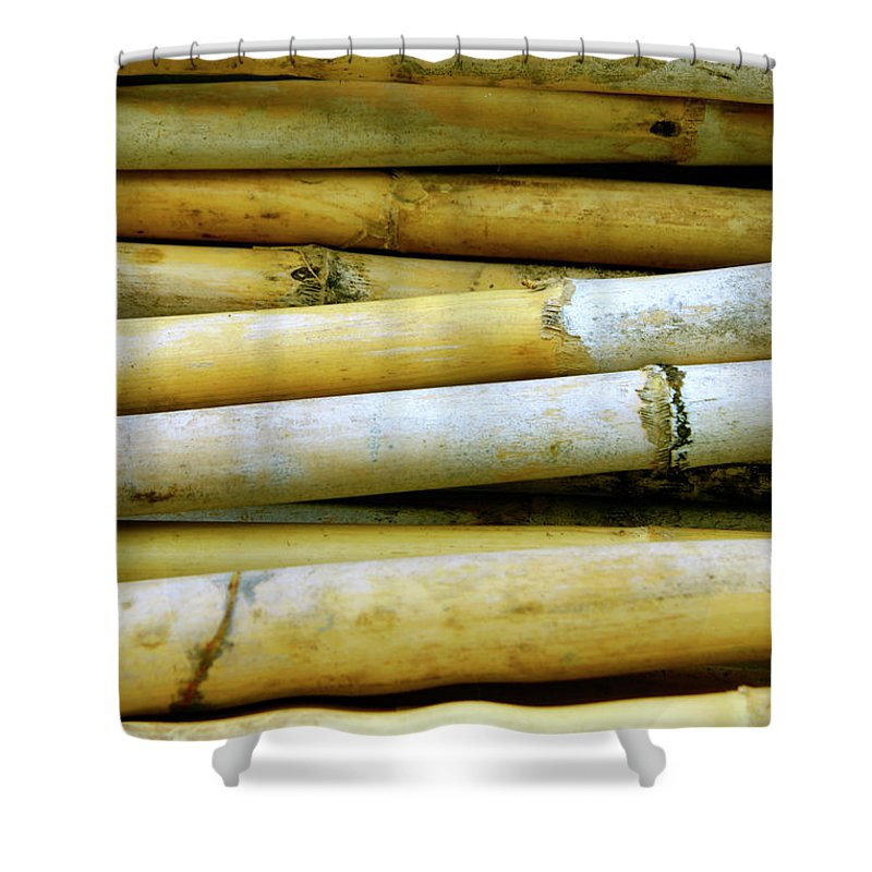 Asian Shower Curtain featuring the photograph Dried Canes by Carlos Caetano