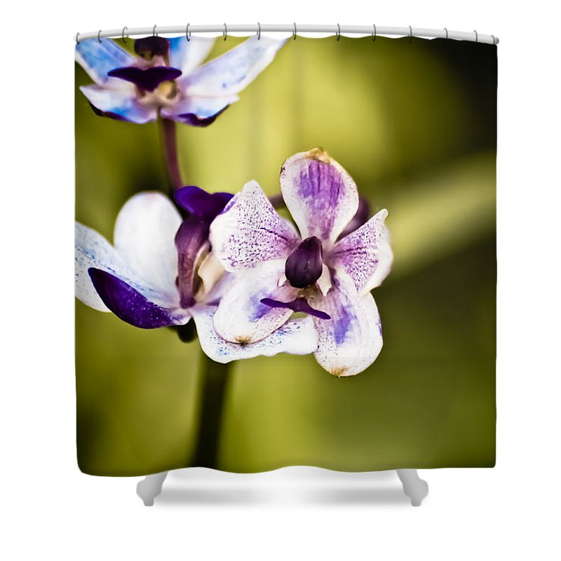 Flower Shower Curtain featuring the photograph Driving Me Crazy by Trish Tritz