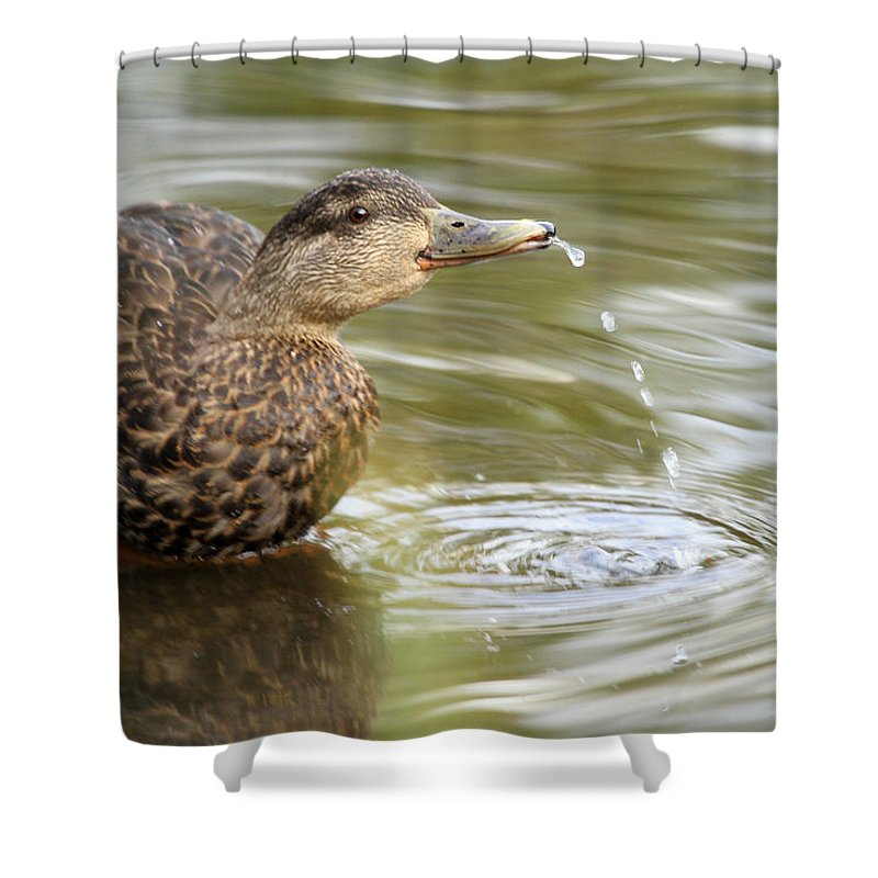 Duck Shower Curtain featuring the photograph Duck Spits by Karol Livote