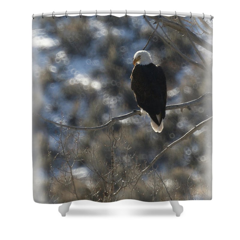 Animal Shower Curtain featuring the photograph Eagle In Tree 2 by Ernie Echols