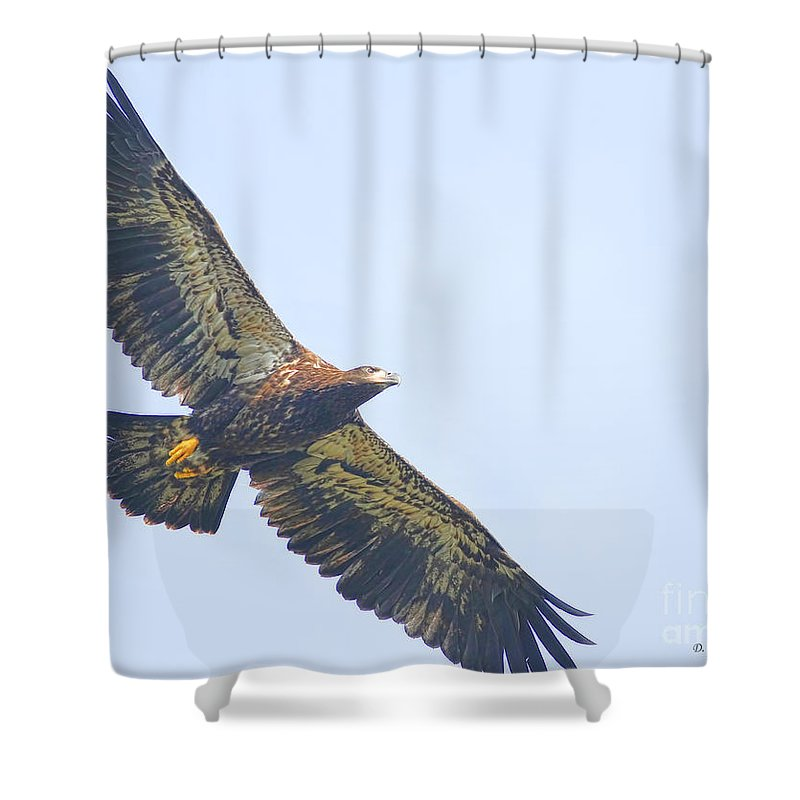 Eaglet Shower Curtain featuring the photograph Eaglet 2012 by Deborah Benoit