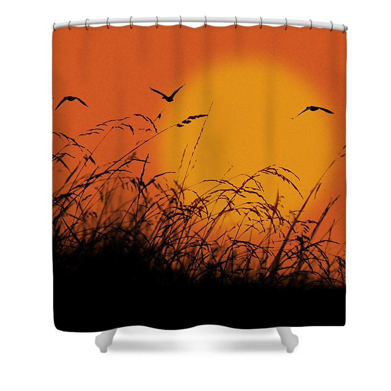Ron Jones Shower Curtain featuring the photograph Early Light by Ron Jones