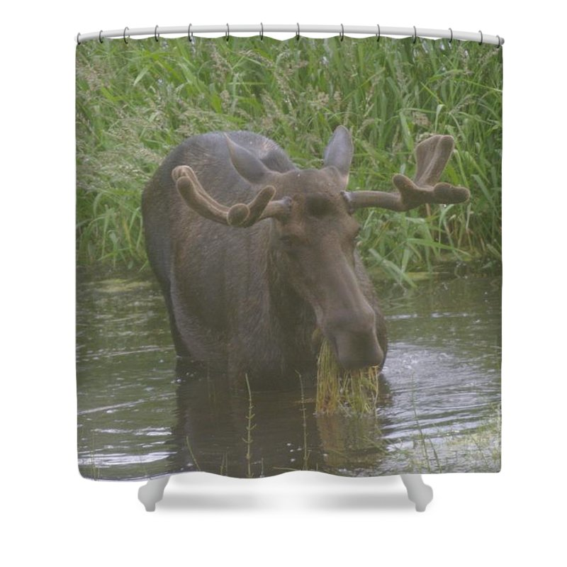 Wildlife Shower Curtain featuring the photograph Eating With His Mouth Full by Jeff Swan