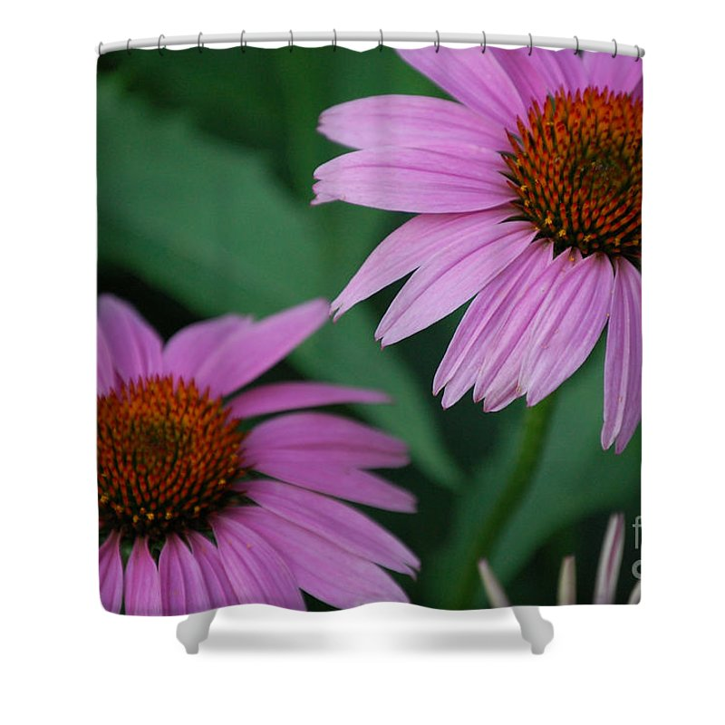 First Star Art Shower Curtain featuring the photograph Echinacea Cone Flowers by First Star Art