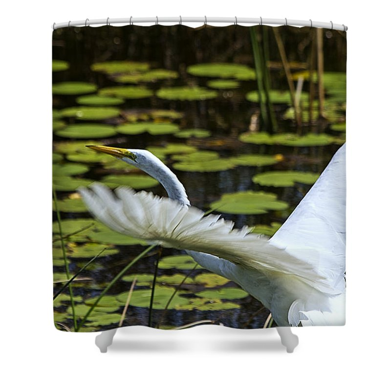 White Egret Shower Curtain featuring the photograph Egret Take Off by Roger Wedegis