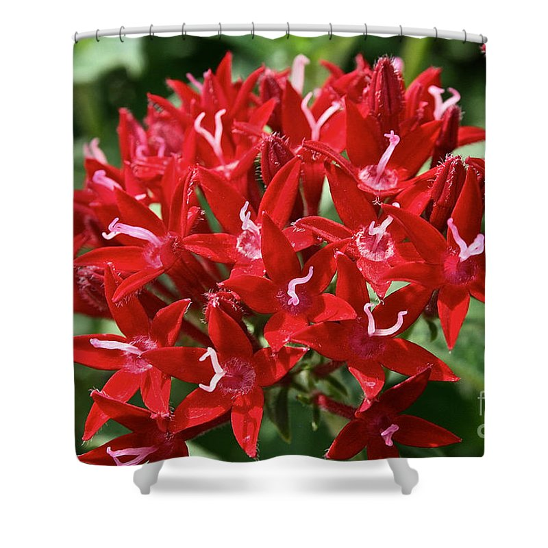 Outdoors Shower Curtain featuring the photograph Egyptian Star Cluster by Susan Herber