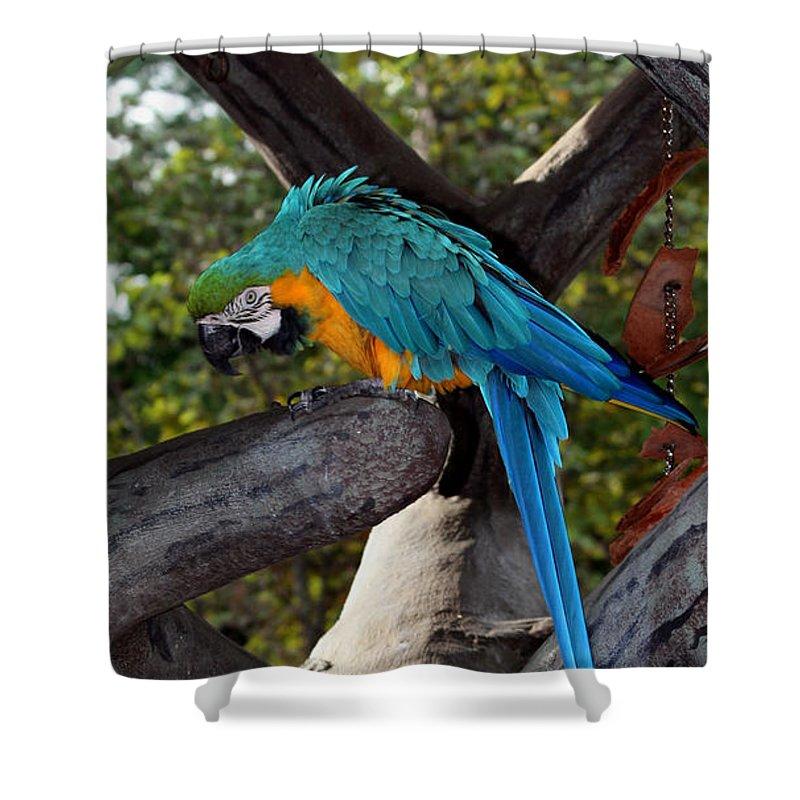 Busch Gardens Shower Curtain featuring the photograph Elegant Parrot by Karen Harrison