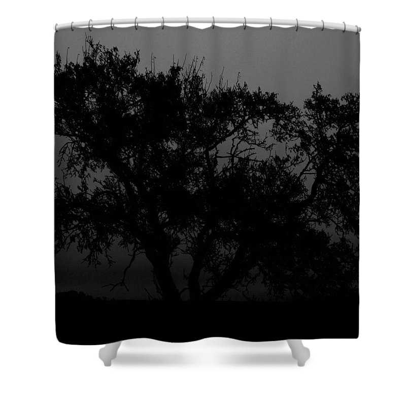 Elm Shower Curtain featuring the photograph Elm In Me by The Artist Project