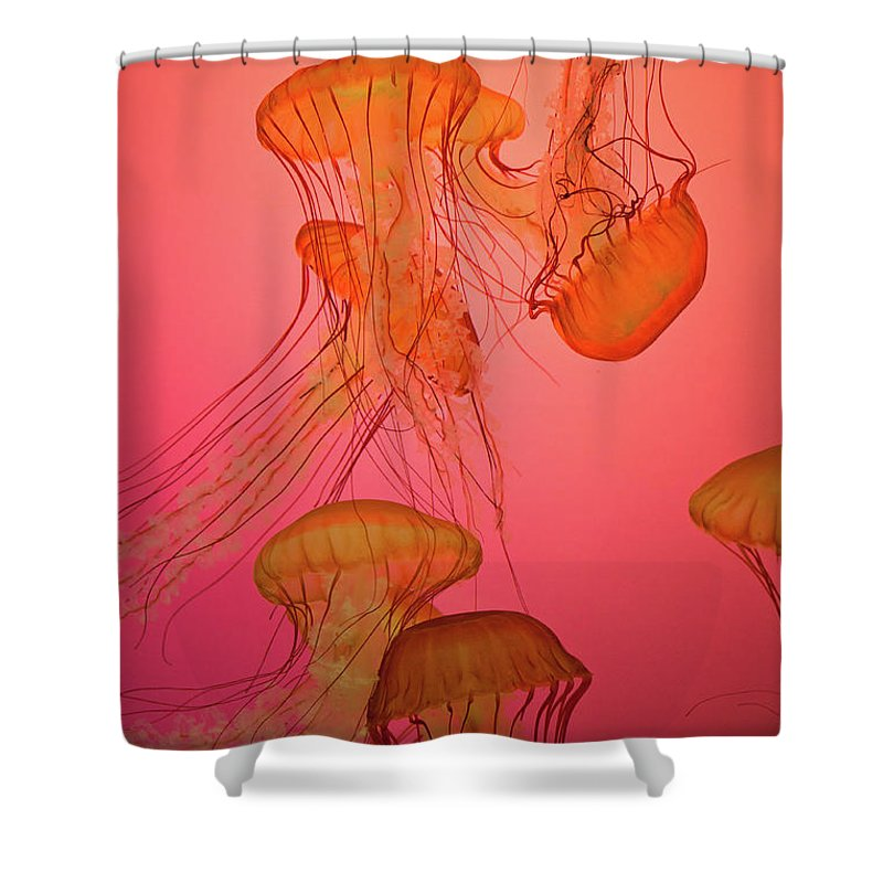 Orange Shower Curtain featuring the photograph Enchanted Jellyfish 3 by Pam Fong