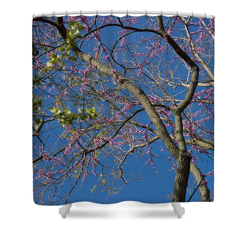 Lavender Blooms Shower Curtain featuring the photograph Entwining by Joseph Yarbrough