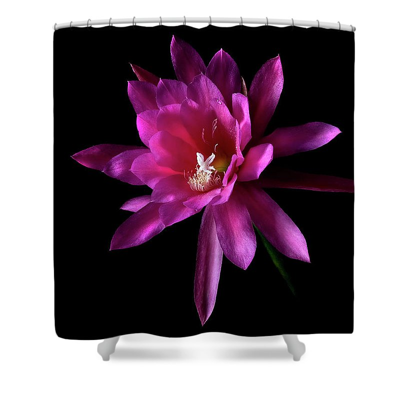 Flower Shower Curtain featuring the photograph Epyphylum Padre by Endre Balogh