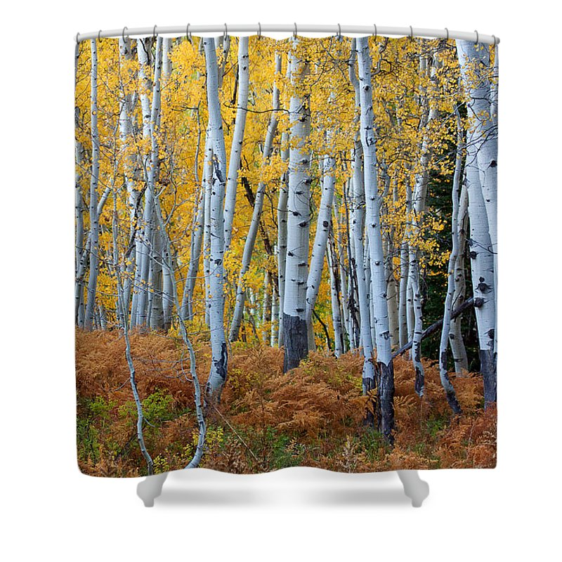 Autumn Colors Photograph Shower Curtain featuring the photograph Evening Gold by Jim Garrison