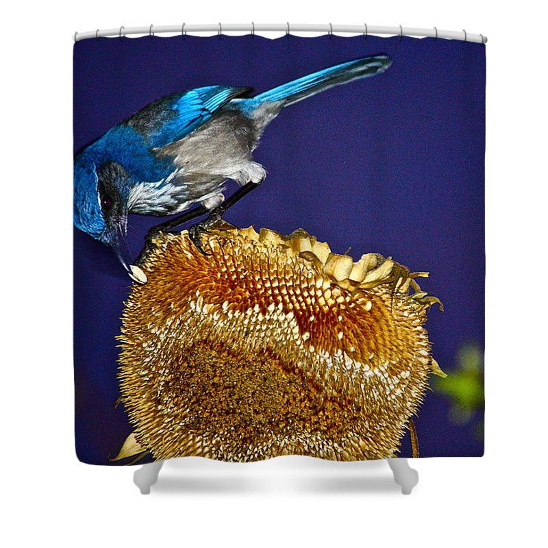 Birds Shower Curtain featuring the photograph Evening Snack by Diana Hatcher