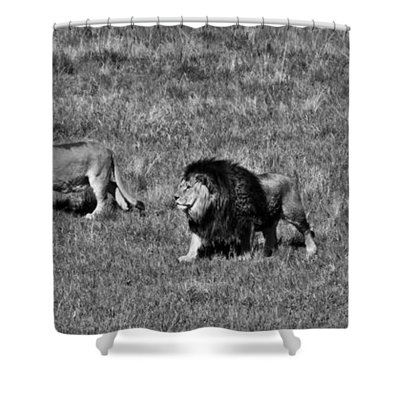 Wild Shower Curtain featuring the photograph Evening Walk by Colleen Coccia