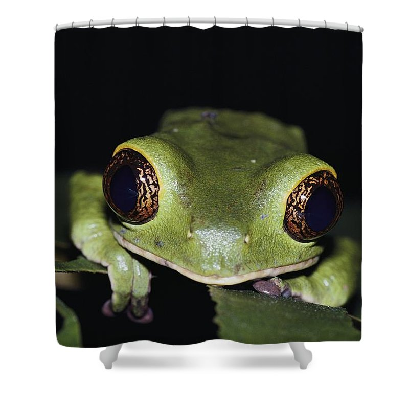 Rain Forests Shower Curtain featuring the photograph Extreme Head-on Close-up Of A Green by Mattias Klum