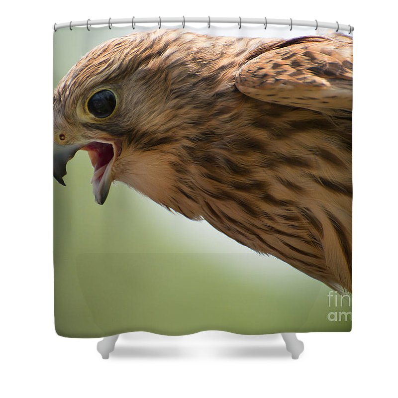 Europe Shower Curtain featuring the photograph Falcon by Andrew Michael