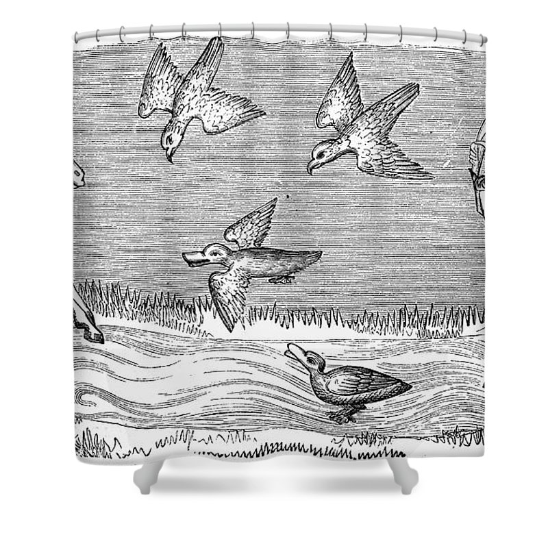 14th Century Shower Curtain featuring the photograph Falconry, 14th Century by Granger