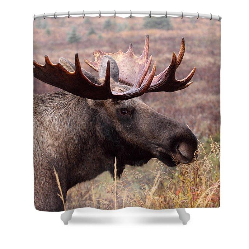 Doug Lloyd Shower Curtain featuring the photograph Fall Beauty by Doug Lloyd