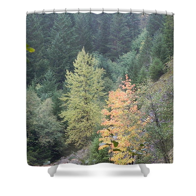 Fall Shower Curtain featuring the photograph Fall Color In The Trees by Linda Hutchins