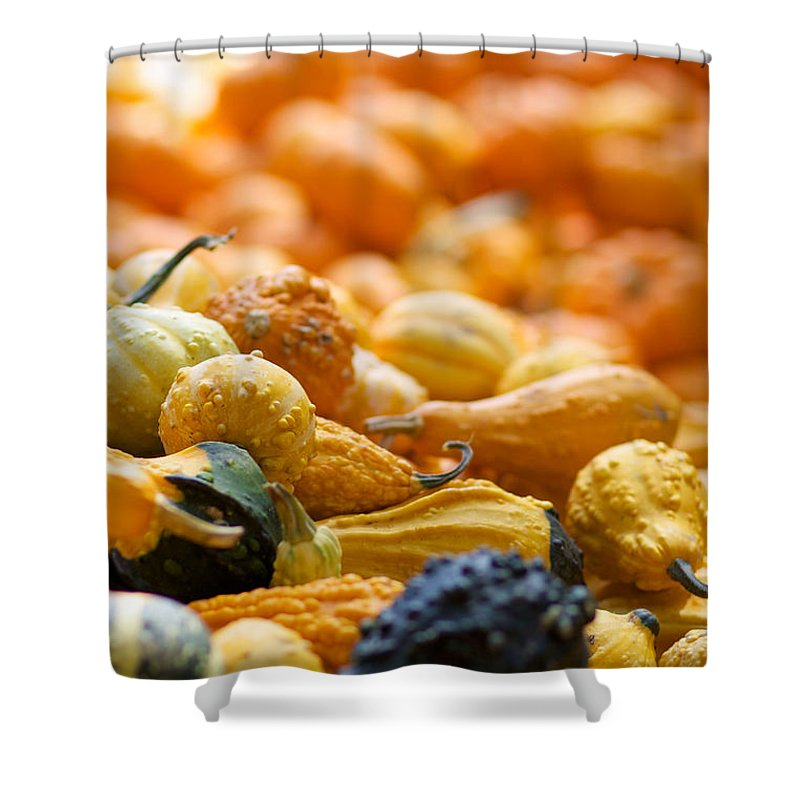 Fall Squash Shower Curtain featuring the photograph Fall Squash Variety by Brooke Roby