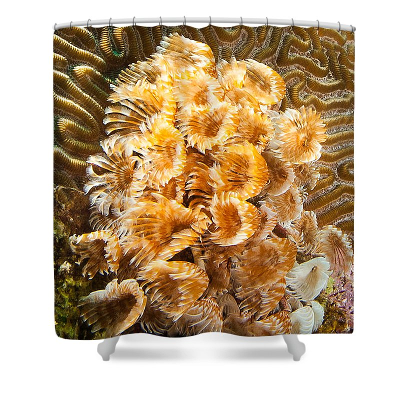 Belize Shower Curtain featuring the photograph Featherduster by Jean Noren