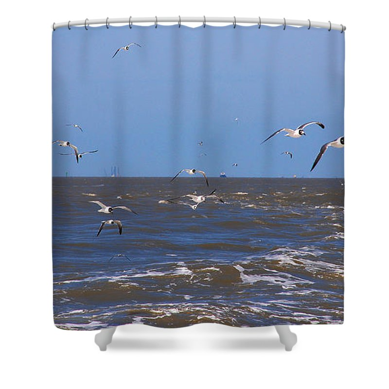 Seagulls Shower Curtain featuring the photograph Feed Us - Ferry To Galveston Tx by Susanne Van Hulst