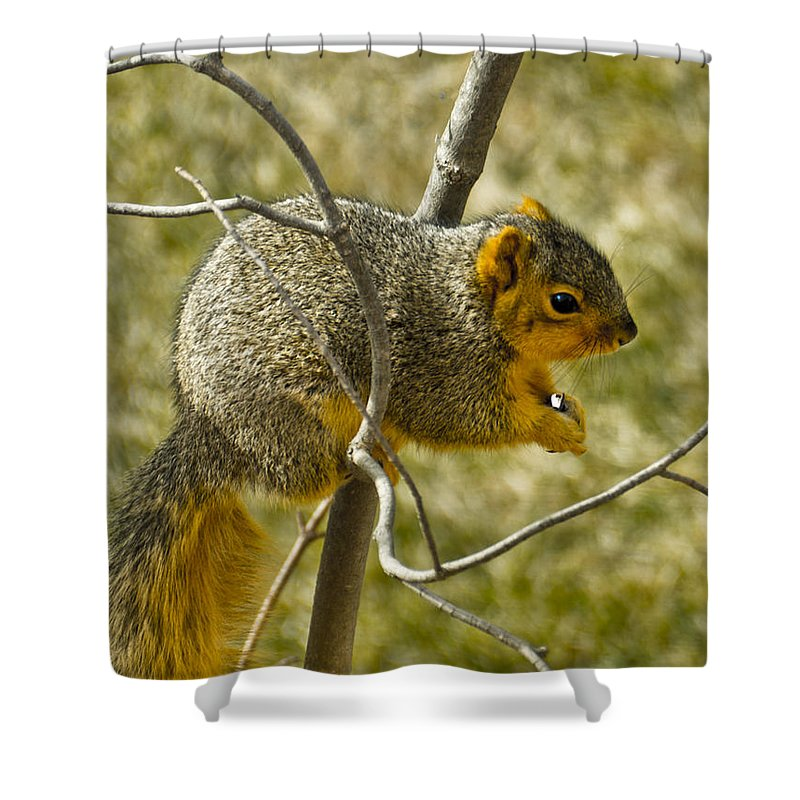 Usa Shower Curtain featuring the photograph Feeding Tree Squirrel by LeeAnn McLaneGoetz McLaneGoetzStudioLLCcom