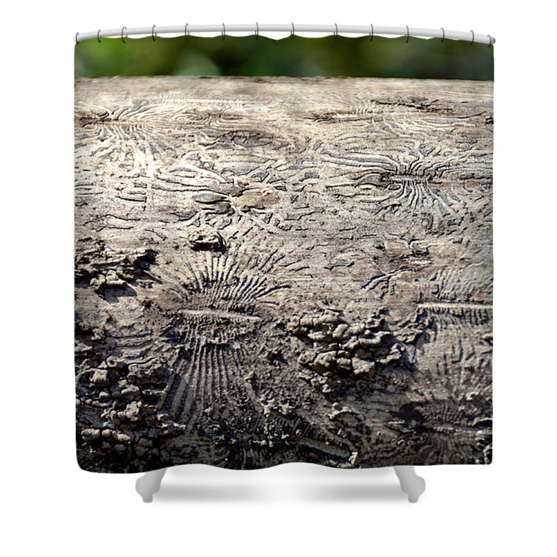 Usa Shower Curtain featuring the photograph Fell By The Mighty Bark Beetle by LeeAnn McLaneGoetz McLaneGoetzStudioLLCcom